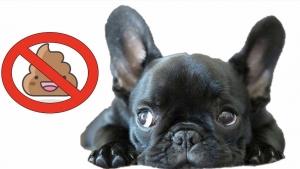 Lotta alle deiezioni canine: prima multa a Cerano