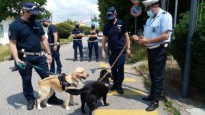 Polizia locale: istituito il Nucleo tutela e sicurezza urbana