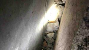 Borgomanero, Vigili del fuoco salvano un gattino caduto tra due case